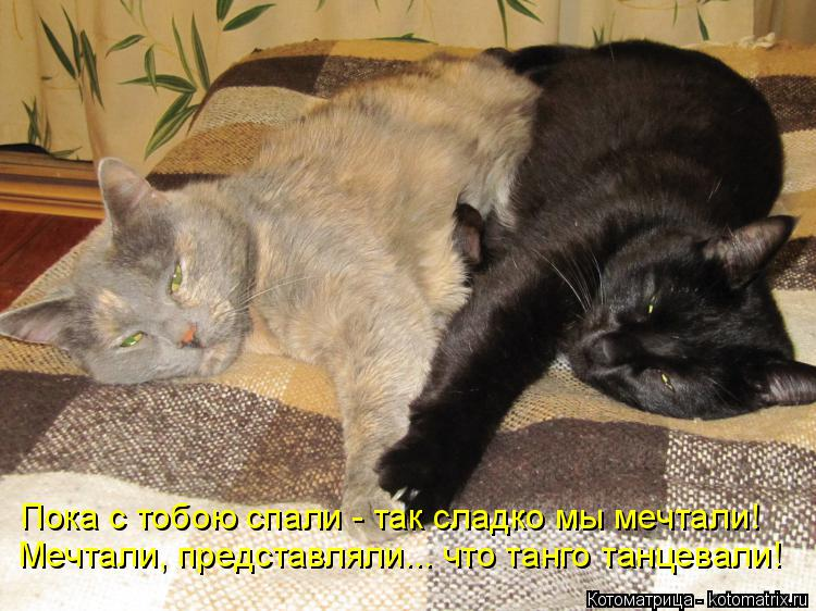 Котоматрица: Пока с тобою спали - так сладко мы мечтали! Мечтали, представляли... что танго танцевали!