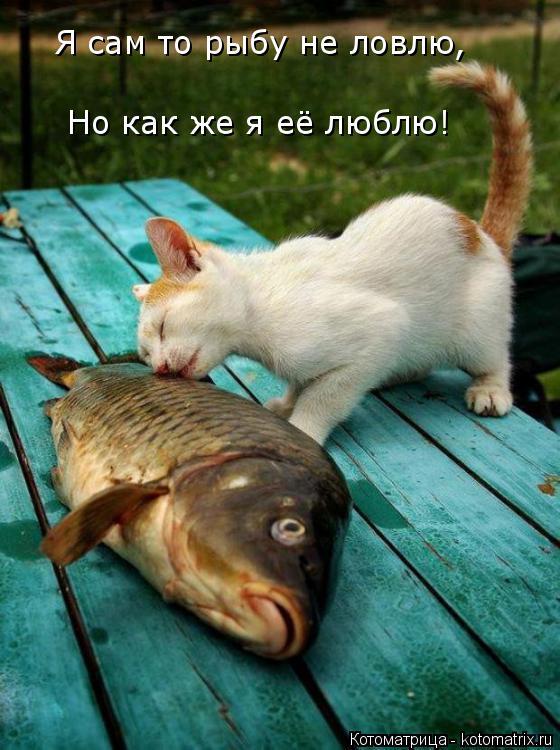 Котоматрица: Я сам то рыбу не ловлю, Но как же я её люблю!