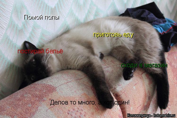 Котоматрица: Помой полы приготовь еду постирай бельё сходи в магазин Делов то много, а кот один!