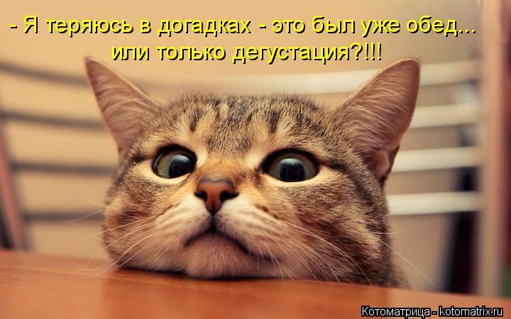Котоматрица: - Я теряюсь в догадках - это был уже обед... или только дегустация?!!!