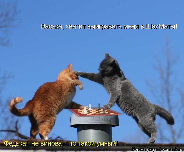 Котоматрица: Васька, хватит выигравать меня в ШахМаты! Федька!  не виноват что такой умный!
