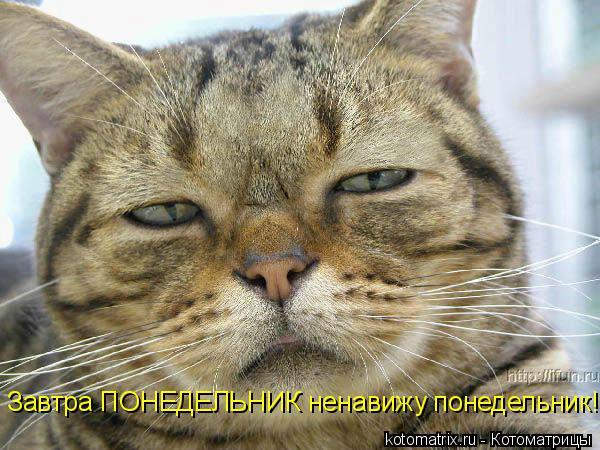 Котоматрица: Завтра ПОНЕДЕЛЬНИК ненавижу понедельник!