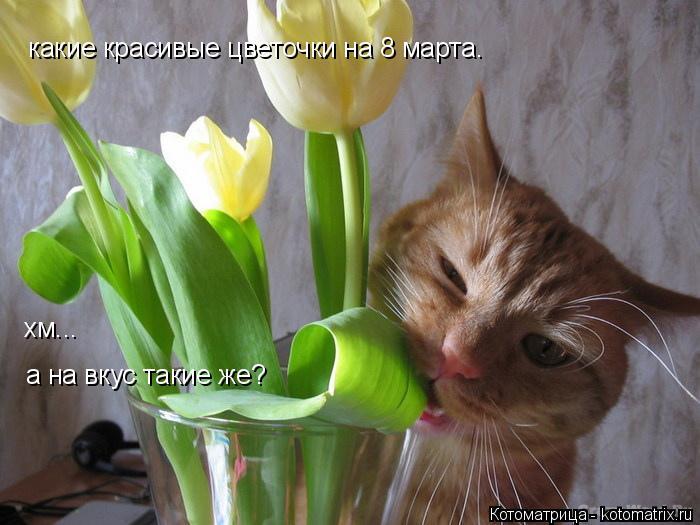 Котоматрица: какие красивые цветочки на 8 марта. хм... а на вкус такие же? какие красивые цветочки на 8 марта.  хм... а на вкус такие же?