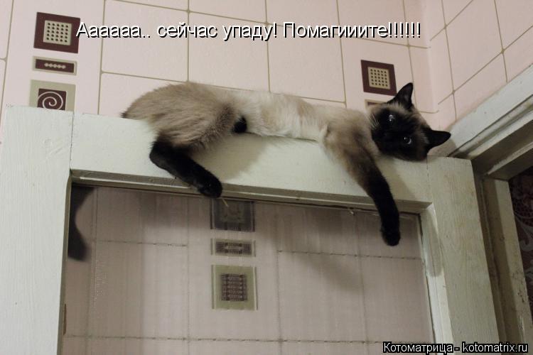 Котоматрица: Аааааа.. сейчас упаду! Помагииите!!!!!!