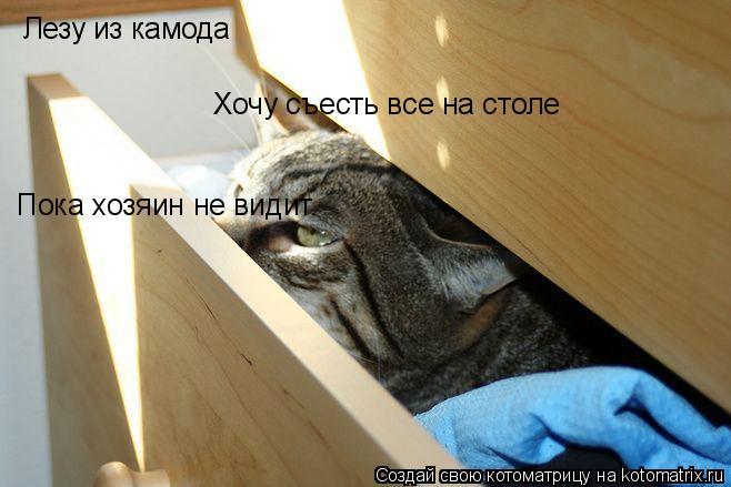 Котоматрица: Лезу из камода Хочу съесть все на столе Пока хозяин не видит.