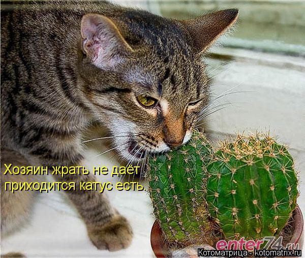 Котоматрица: Хозяин жрать не даёт приходится катус есть.