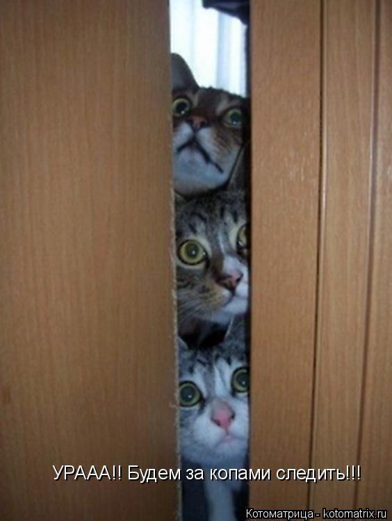 Котоматрица: УРААА!! Будем за копами следить!!!