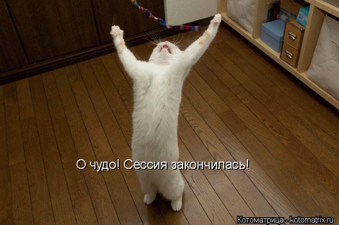 Котоматрица: О чудо! Сессия закончилась!