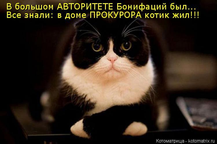 Котоматрица: В большом АВТОРИТЕТЕ Бонифаций был...  Все знали: в доме ПРОКУРОРА котик жил!!!