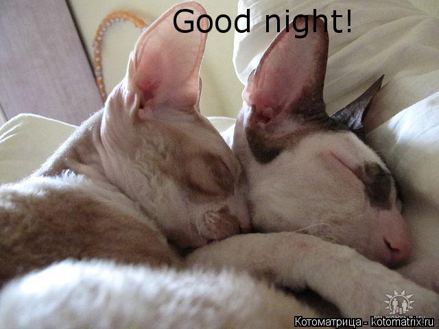 Котоматрица: Good night! Good night!