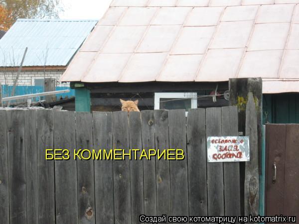 Котоматрица: БЕЗ КОММЕНТАРИЕВ