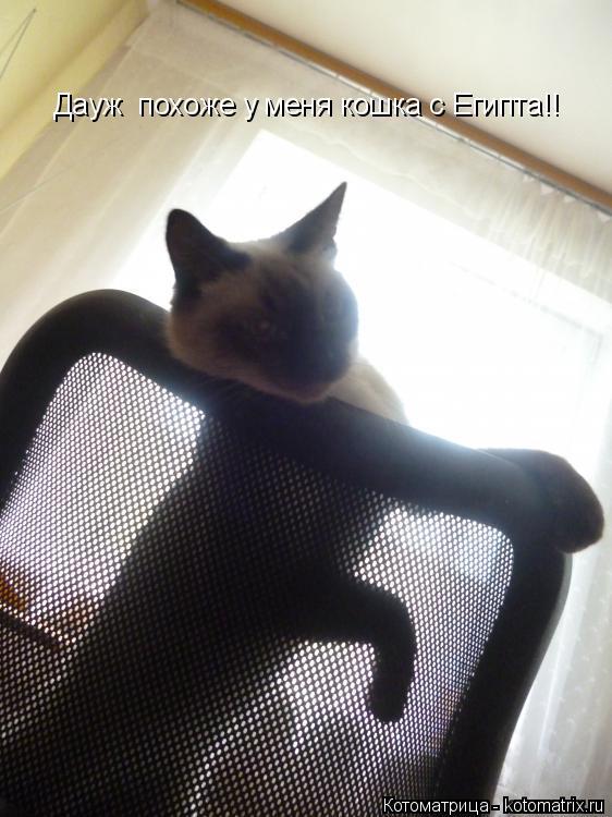 Котоматрица: Дауж  похоже у меня кошка с Египта!!
