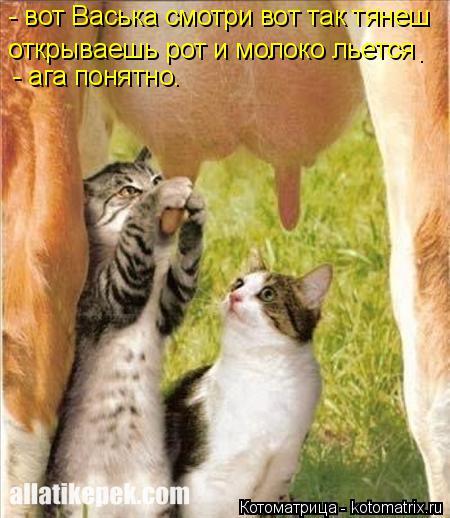 Котоматрица: - вот Васька смотри вот так тянеш открываешь рот и молоко льется - ага понятно. .