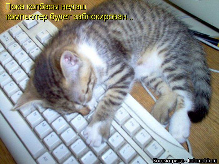 Котоматрица: Пока колбасы недаш компьютер будет заблокирован...