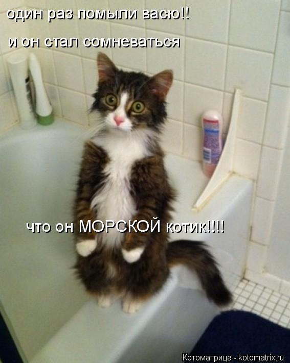 Котоматрица: один раз помыли васю!! и он стал сомневаться что он МОРСКОЙ котик!!!!