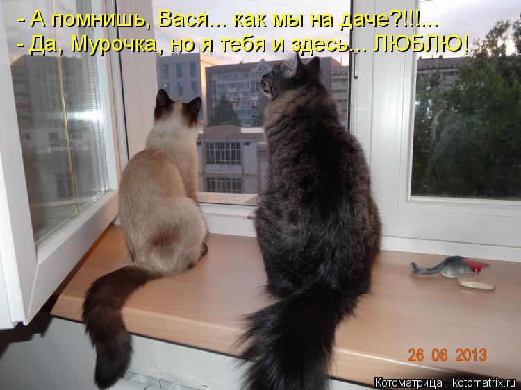 Котоматрица: - А помнишь, Вася... как мы на даче?!!!... - Да, Мурочка, но я тебя и здесь... ЛЮБЛЮ!