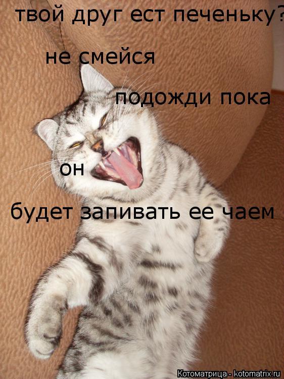Котоматрица: твой друг ест печеньку? будет запивать ее чаем не смейся подожди пока он