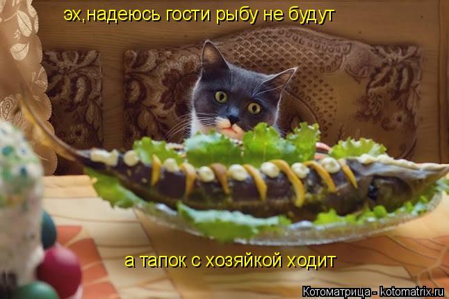 Котоматрица: эх,надеюсь гости рыбу не будут а тапок с хозяйкой ходит