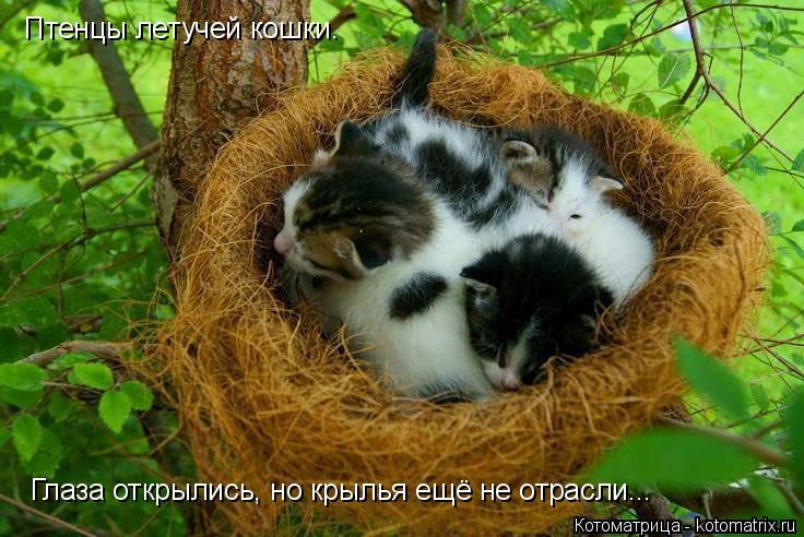 Котоматрица: Птенцы летучей кошки.  Глаза открылись, но крылья ещё не отрасли...