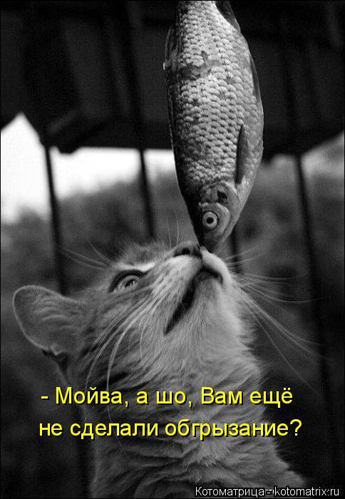 Котоматрица: - Мойва, а шо, Вам ещё не сделали обгрызание?