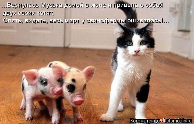 Котоматрица: ...Вернулась Муська домой в июне и привела с собой  Опять, видать, весь март у свинофермы ошивалась!... двух своих котят.
