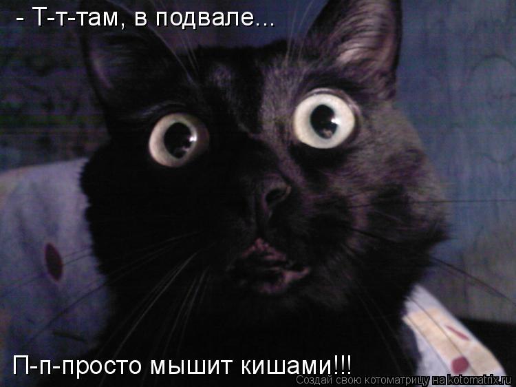 Котоматрица: - Т-т-там, в подвале...  П-п-просто мышит кишами!!!