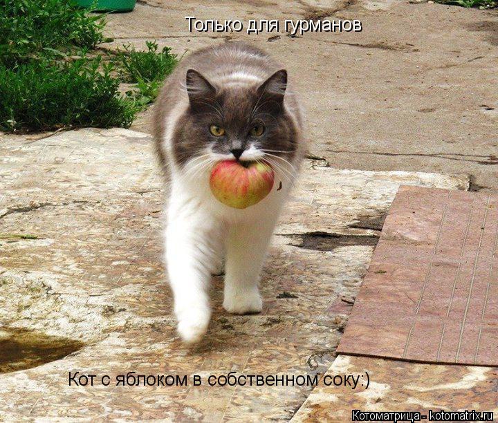 Котоматрица: Только для гурманов Кот с яблоком в собственном соку:)