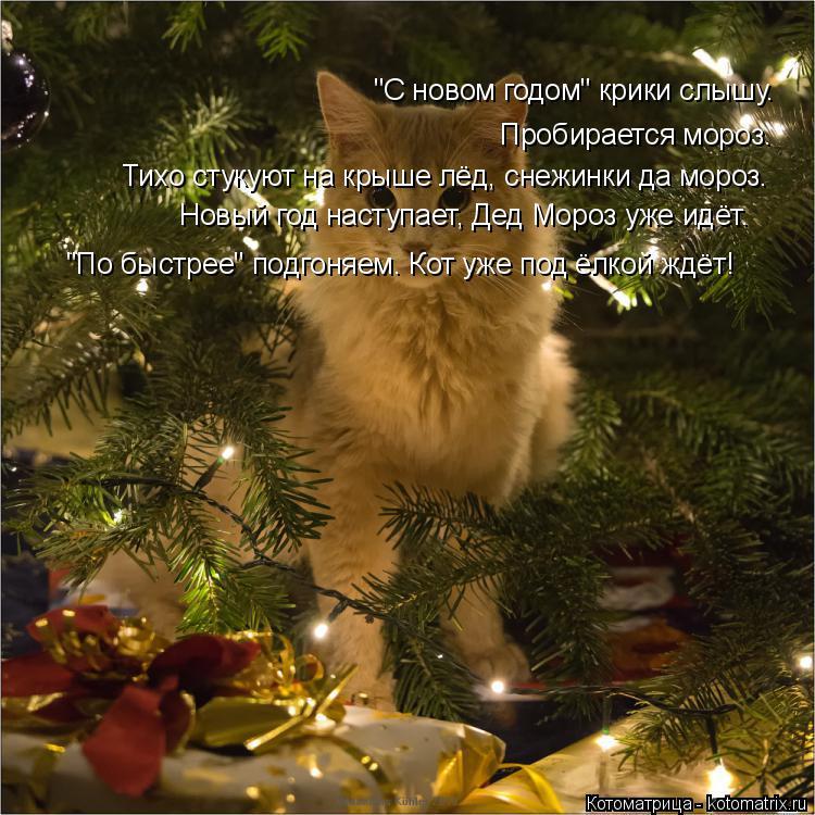 """Котоматрица: """"С новом годом"""" крики слышу. Пробирается мороз. Тихо стукуют на крыше лёд, снежинки да мороз. Новый год наступает, Дед Мороз уже идёт. """"По быст"""