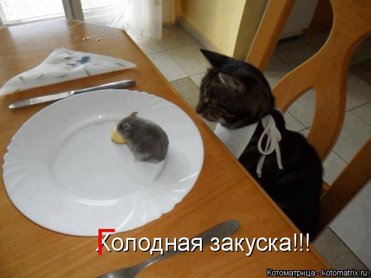 Котоматрица: Холодная закуска!!! Г