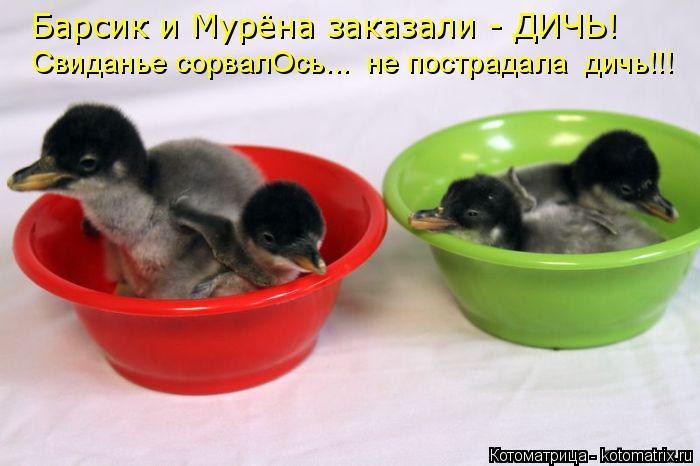 Котоматрица: Барсик и Мурёна заказали - ДИЧЬ! Свиданье сорвалОсь...  не пострадала  дичь!!!