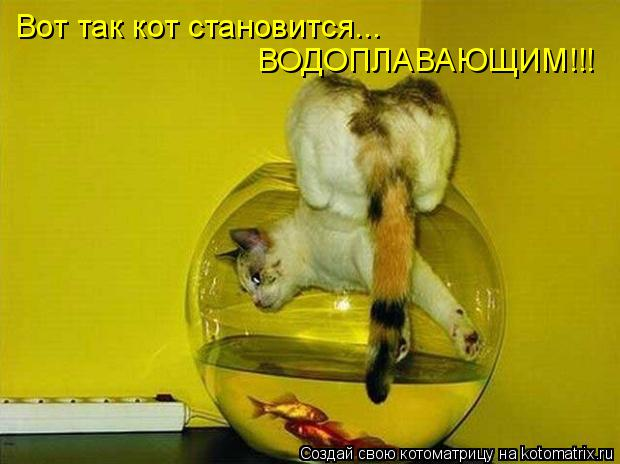 Котоматрица: Вот так кот становится... ВОДОПЛАВАЮЩИМ!!!