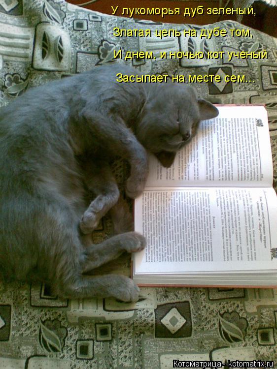 Котоматрица: У лукоморья дуб зеленый, Златая цепь на дубе том, И днем, и ночью кот ученый Засыпает на месте сем...