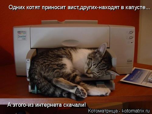 Котоматрица: Одних котят приносит аист,других-находят в капусте... А этого-из интернета скачали!