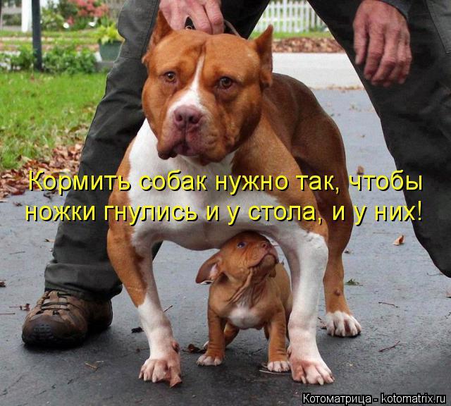 Котоматрица: Кормить собак нужно так, чтобы ножки гнулись и у стола, и у них!