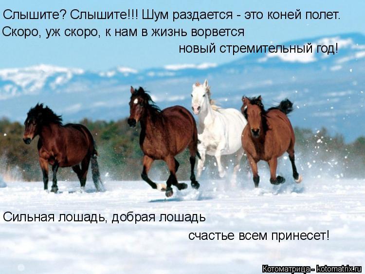 Котоматрица: Слышите? Слышите!!! Шум раздается - это коней полет. Скоро, уж скоро, к нам в жизнь ворвется новый стремительный год! Сильная лошадь, добрая ло