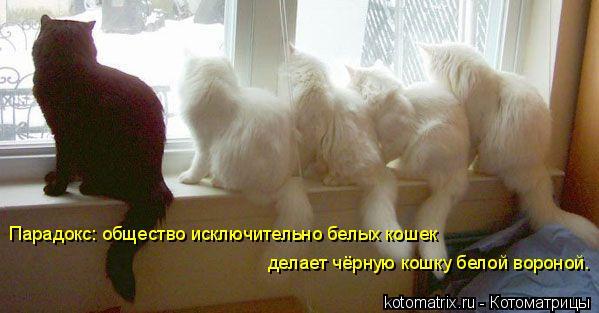 Котоматрица: Парадокс: общество исключительно белых кошек  делает чёрную кошку белой вороной.