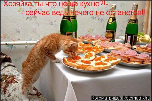 Котоматрица: Хозяйка,ты что не на кухне?!- - сейчас ведь нечего не останется!!!