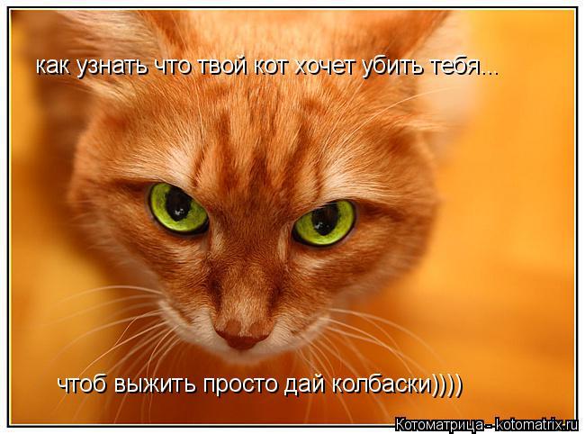 Котоматрица: как узнать что твой кот хочет убить тебя... чтоб выжить просто дай колбаски))))