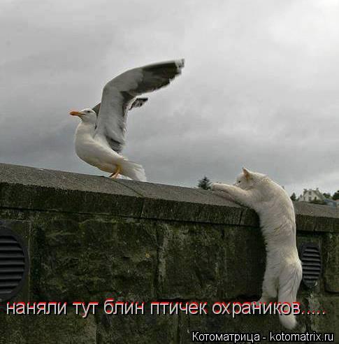 Котоматрица: наняли тут блин птичек охраников..... наняли тут блин птичек охраников.....