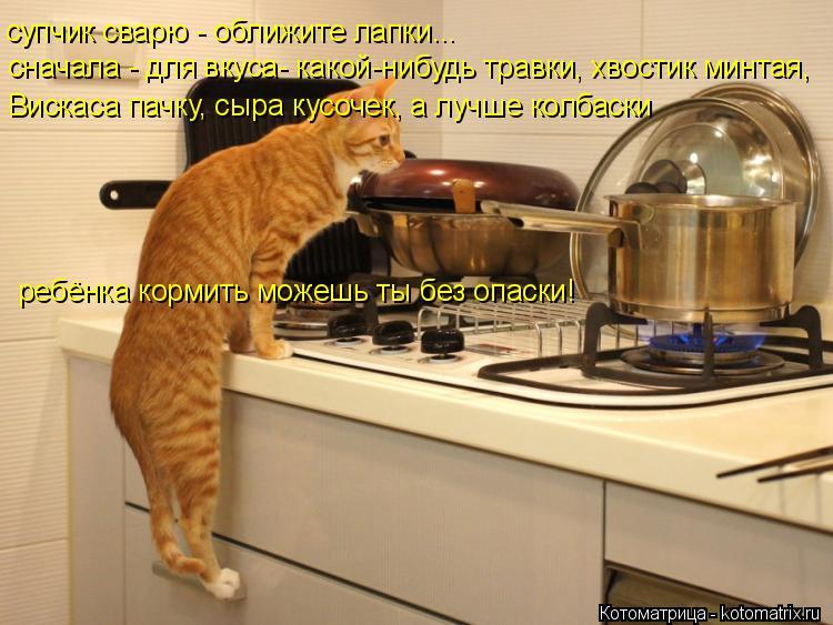 Котоматрица: супчик сварю - оближите лапки...    сначала - для вкуса- какой-нибудь травки, хвостик минтая, Вискаса пачку, сыра кусочек, а лучше колбаски  ребё