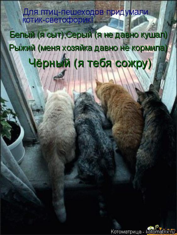 Котоматрица: Для птиц-пешеходов придумали  котик-светофорик! Белый (я сыт);Серый (я не давно кушал) Рыжий (меня хозяйка давно не кормила) Чёрный (я тебя сож