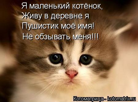 Котоматрица: Я маленький котёнок, Живу в деревне я Пушистик моё имя! Не обзывать меня!!!