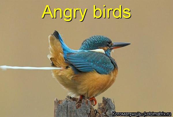 Котоматрица: Angry birds