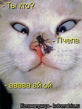 Котоматрица: - Ты кто? - Пчела - ааааа ай ой