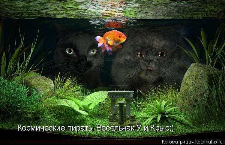Котоматрица: Космические пираты Весельчак У и Крыс:)