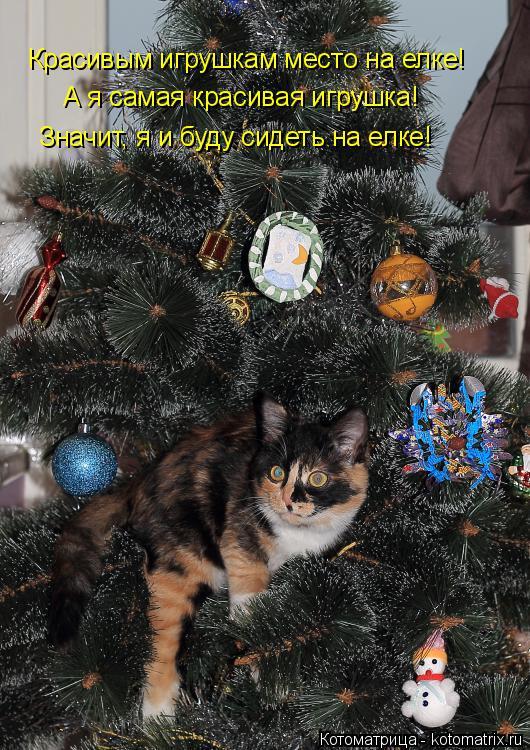 Котоматрица: Красивым игрушкам место на елке! А я самая красивая игрушка! Значит, я и буду сидеть на елке!