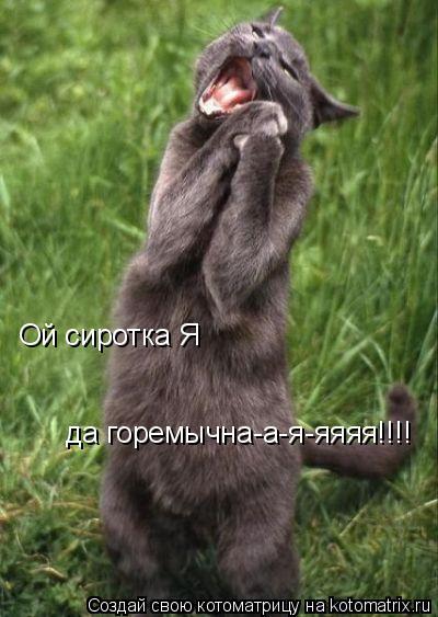 Котоматрица: Ой сиротка Я  да горемычна-а-я-яяяя!!!!