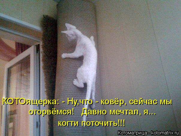 Котоматрица: КОТОящерка: - Ну,что - ковёр, сейчас мы оторвёмся!   Давно мечтал, я...  когти поточить!!!