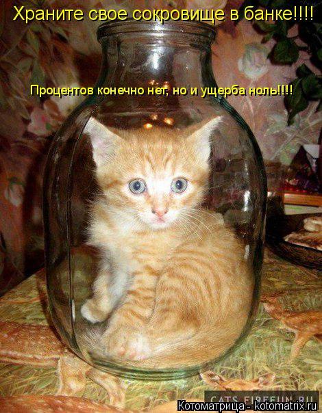 Котоматрица: Храните свое сокровище в банке!!!! Процентов конечно нет, но и ущерба ноль!!!!