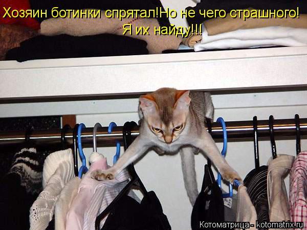 Котоматрица: Хозяин ботинки спрятал!Но не чего страшного! Я их найду!!!